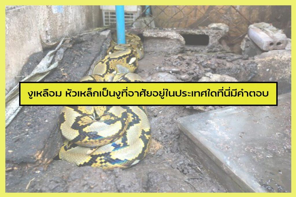 งูเหลือม