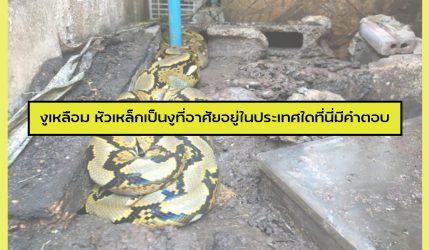 งูเหลือม หัวเหล็กเป็นงูที่อาศัยอยู่ในประเทศใดที่นี่มีคำตอบ