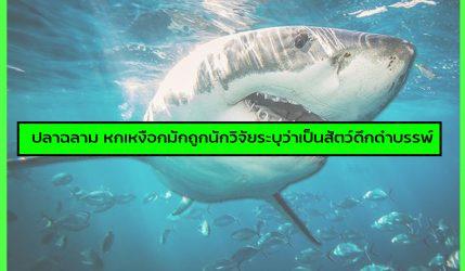 ปลาฉลาม หกเหงือกมักถูกนักวิจัยระบุว่าเป็นสัตว์ดึกดำบรรพ์
