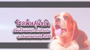 โรคพิษสุนัขบ้า มีพิษที่ส่งผลต่อร่างกายร้ายแรง อาจส่งผลอันตรยต่อชีวิตได้
